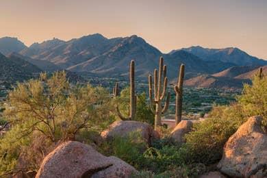 Cacti in Scottsdale