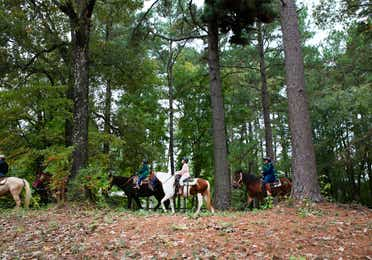 A group horseback riding in the woods