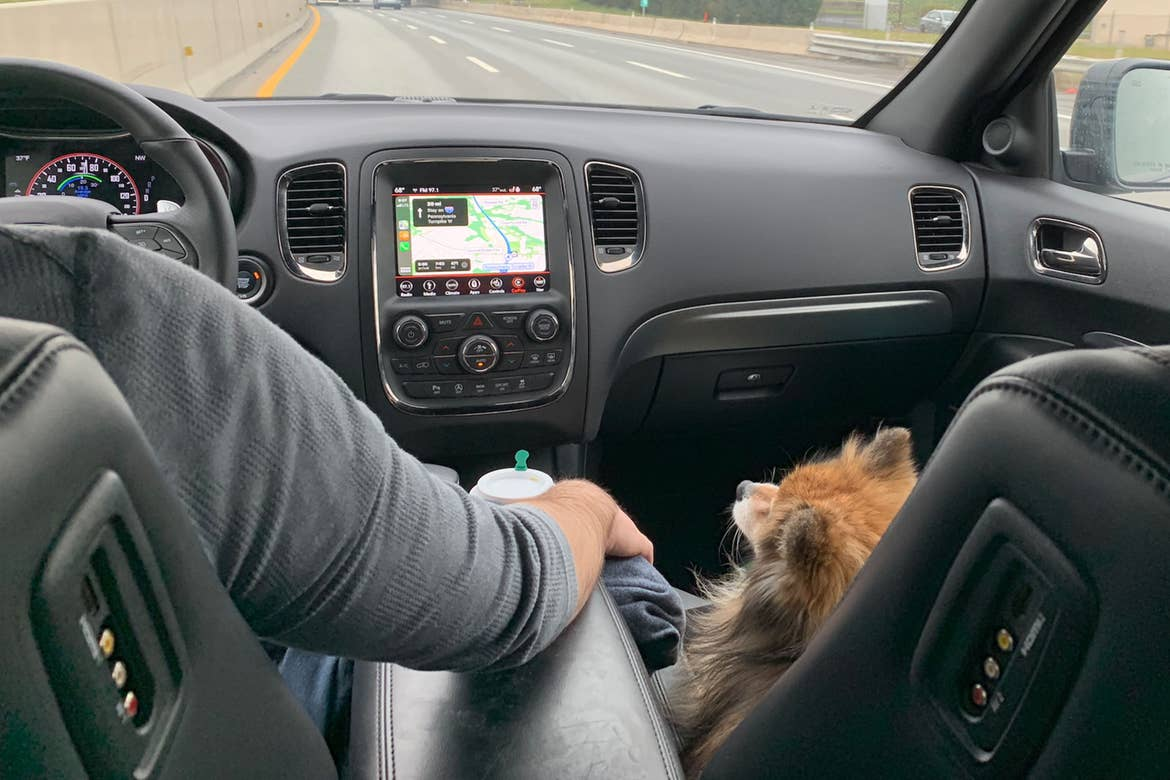 Author, Anthony LeDonne, drives their vehicle with Bailey the Pomeranian as they venture on their road trip.