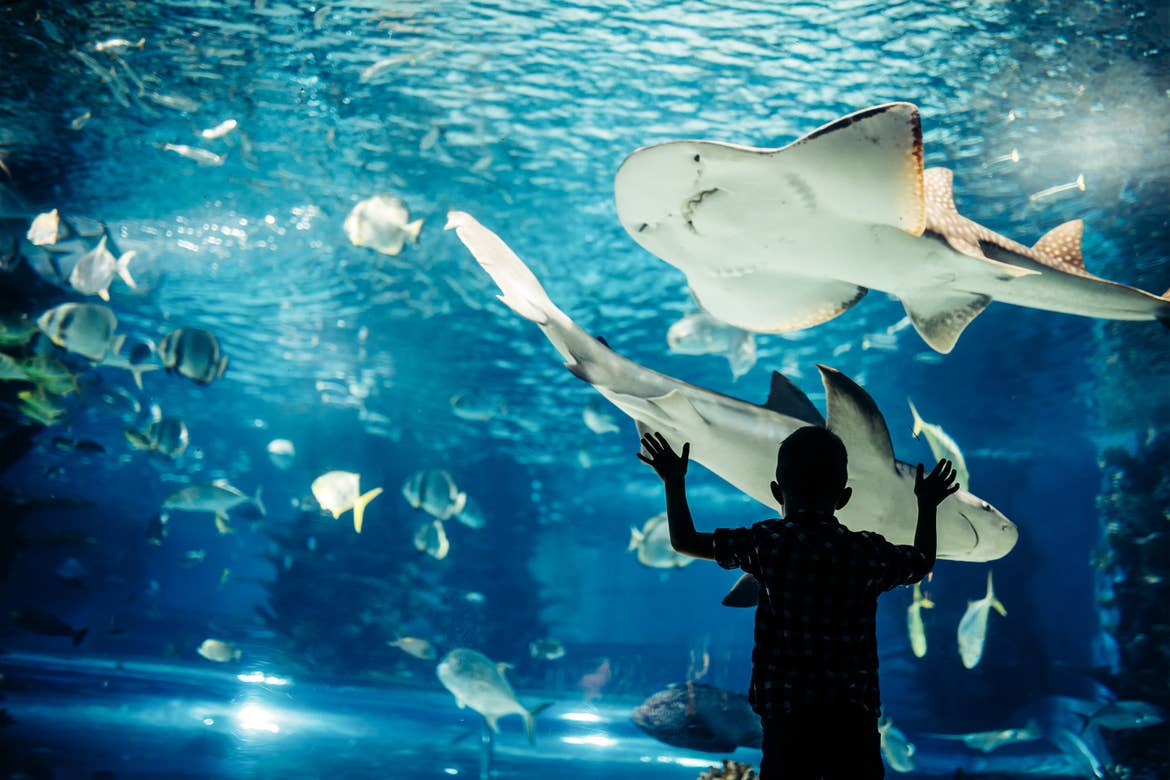 A young boy stands in front of an aquarium tank.