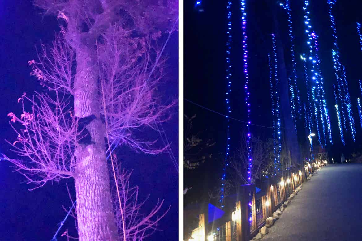 Left: A black bear climbs a tree surrounded by purple lights. Right: A hanging twinkling-light display with a light path.
