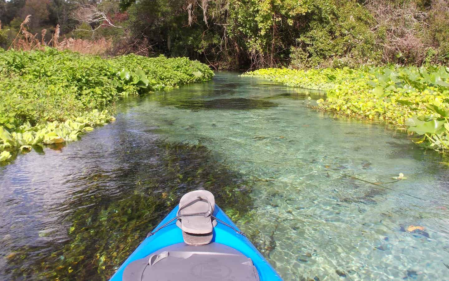 Kayak in a river surrounded by plant life
