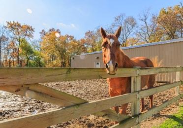 Horseback riding at Fox River Resort in Sheridan, Illinois