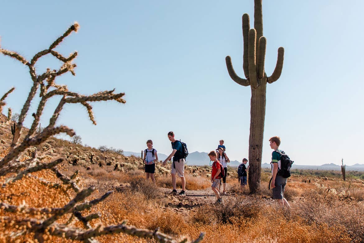 Author Jessica Averett's family hikes alongside the trails of the McDowell Sonoran Preserve surrounded by various cacti.
