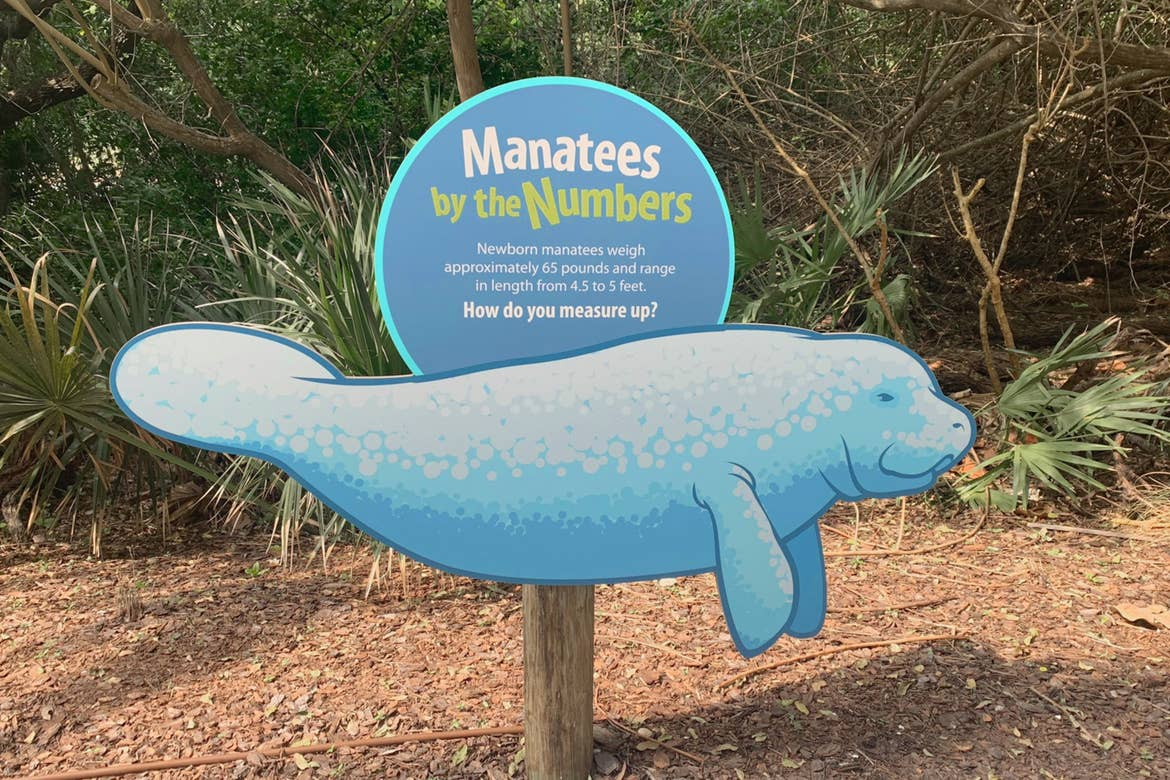 An informational sign indicating the size of manatees.