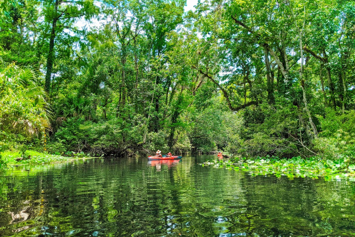 A man and young boy in a red kayak paddle down a scenic river through green foliage.