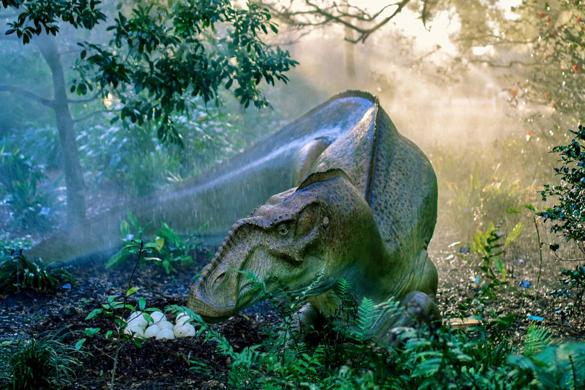 A Dinosaur Invasion at Harry P. Leu Gardens where a female Hypsibema and her Nest.