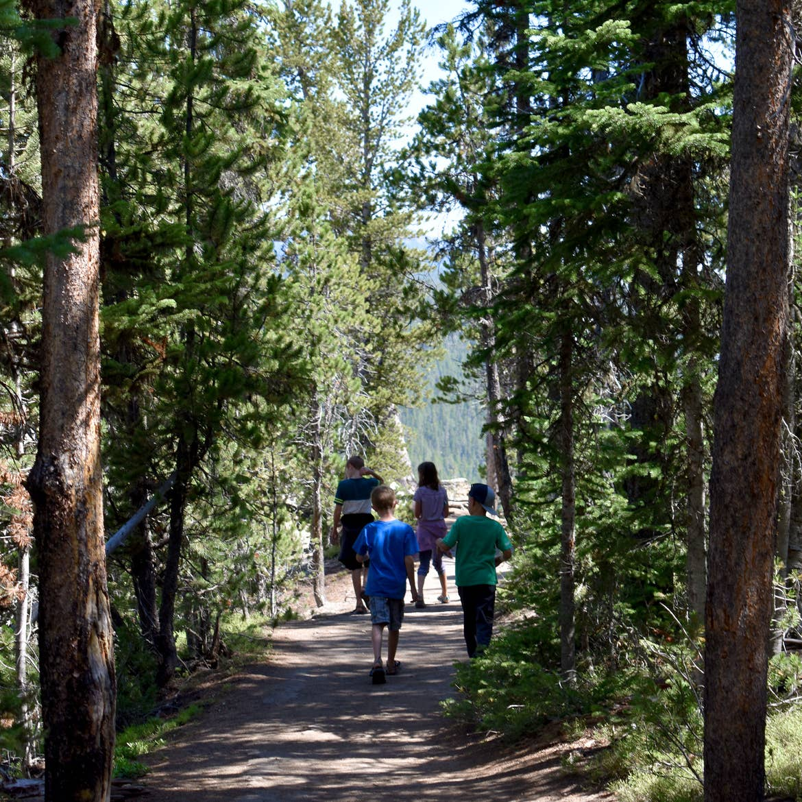 Featured Contributor, Jessica Averett's family walk through the Grove of Patriarchs at Mount Rainier National Park.