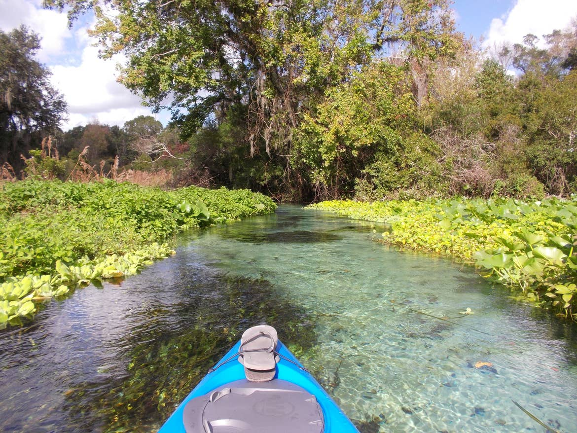 A blue kayak with flip flops tied up in a river surrounded by water plants.