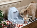 Your Guide to the Best Water Fountain for Pets