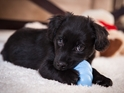 Best Toys for Puppies