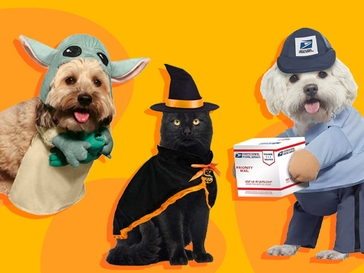 25 Pet Halloween Costumes for Dogs, Cats and, Yes, Guinea Pigs