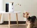 A Review of Furbo Dog Camera