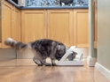The Best Automatic Cat Feeders