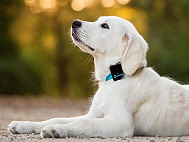 Your Guide to the Best Pet GPS Trackers