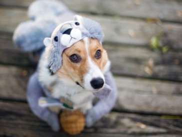 Warning: These 30 Adorable Pet Halloween Costumes Will Cause Sudden Fits of Laughter
