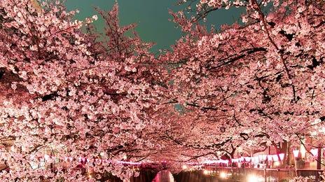 Japan_Tokyo_iStock-518614590.jpg