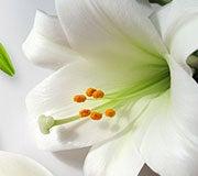 sympathy-funeral-garden-article-1.jpg