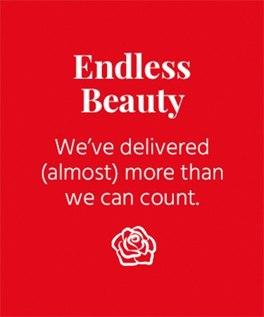 Endless Beauty