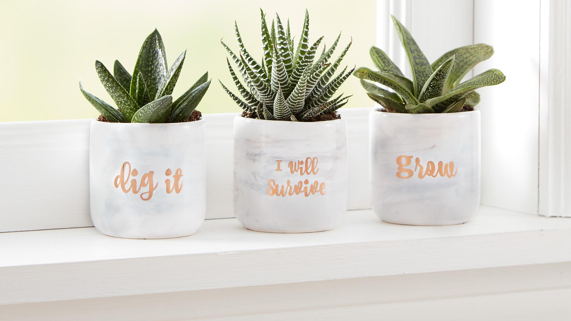 Trio Succulent
