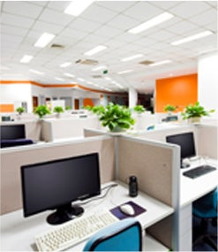 The 7 Best Plants to Use in Your Office