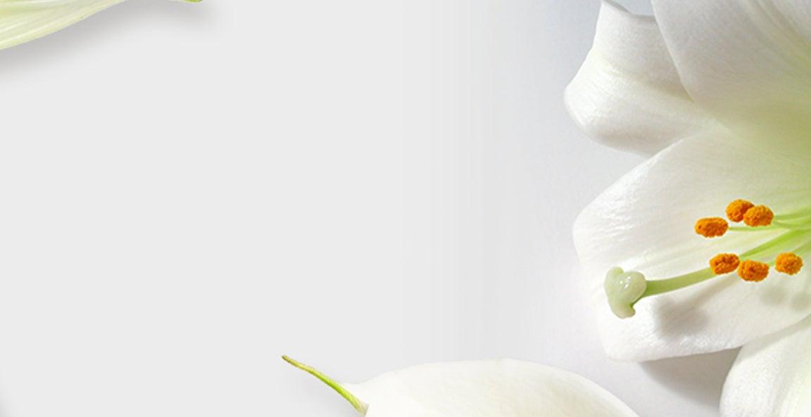 banner-meanin-of-funeral-sympathy-flowers-v1.jpg