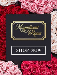 Magnificent Preserved Roses