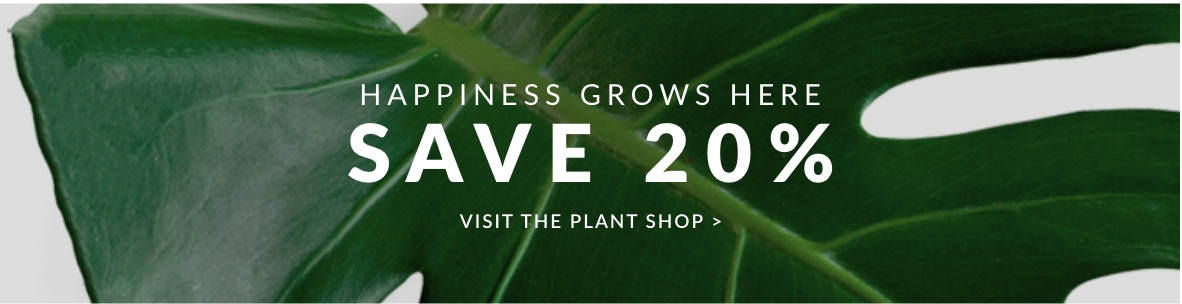 house-plants-indoor-plant-gifts-zone-10-new-20p-fw9.jpg