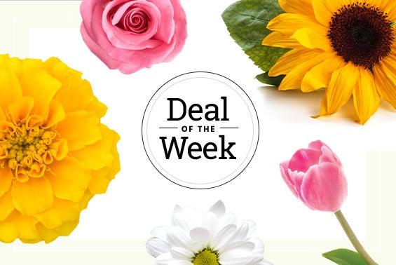 m-_deal-of-the-week-everyday.jpg