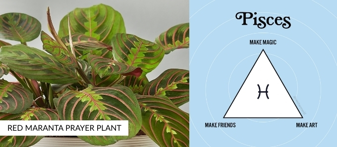 zodiac-plants-pisces.jpg