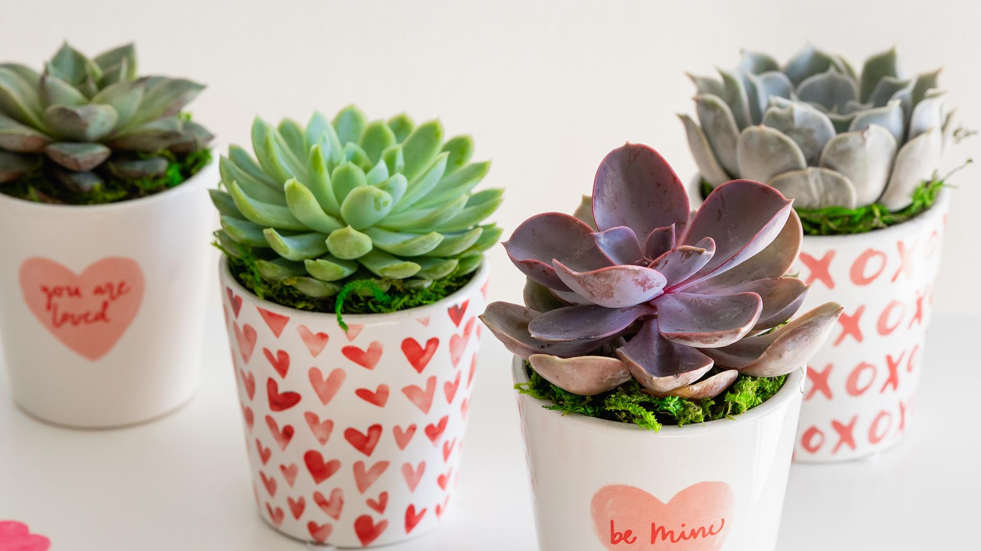 Valentine's Day Succulent 1