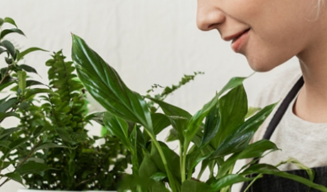 How Indoor Plants Affect Your Mood & Productivity