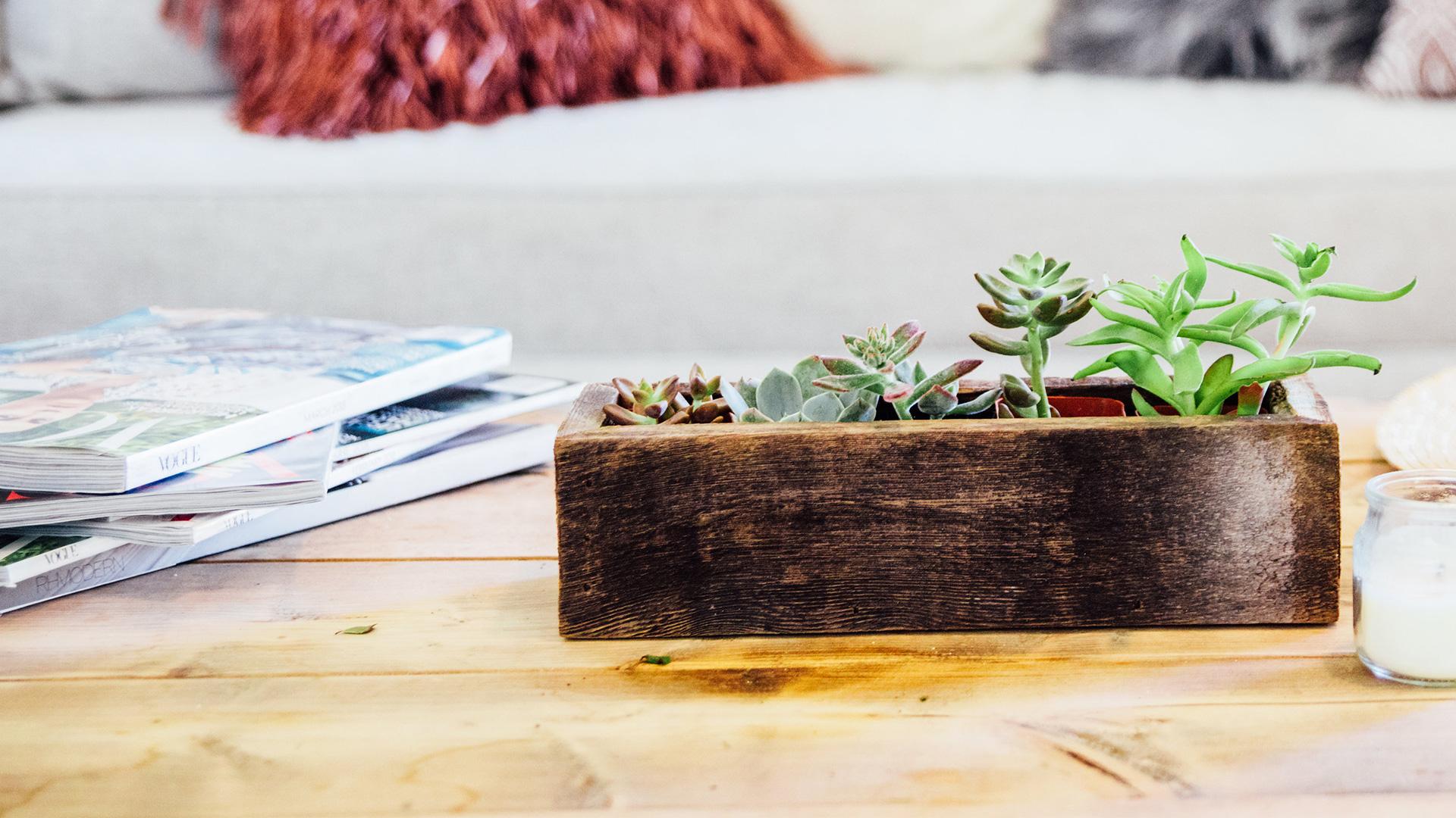 Wooden Succulent