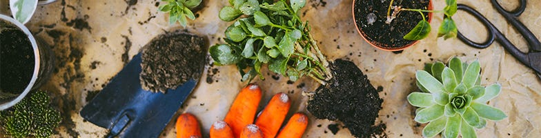 Plant Care & Handling