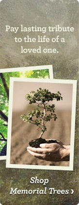 trees-moc-memorialtrees.jpg