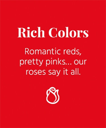 Rich Colors