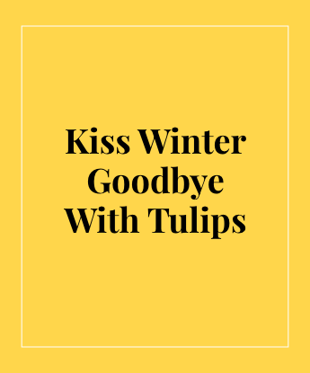 Kiss Winter Goodbye With Tulips