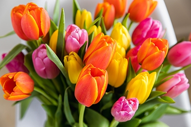 tulips-free-virtual-background.jpg