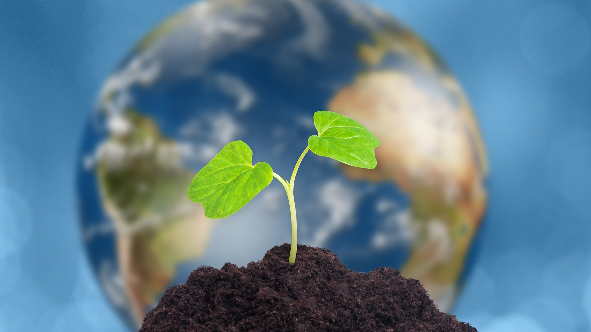 Earth and Seedling