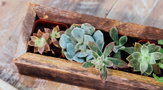 Plant Gift Guide