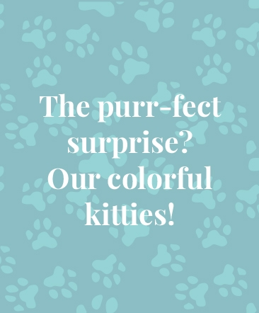 The purr-fect surprise? Our colorful kitties!