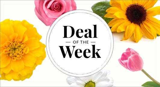 deal-ofthe-week-everyday-imoc-banner.jpg