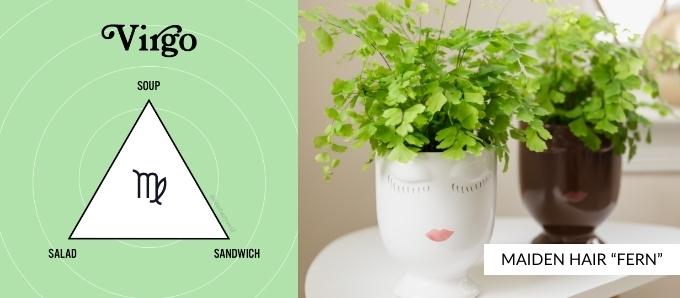 zodiac-plants-virgo.jpg