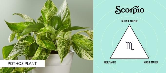 zodiac-plants-scorpio.jpg