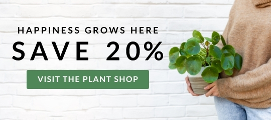 house-plants-indoor-plant-gifts-zone-10-new-20p-fy22-fw14.jpg