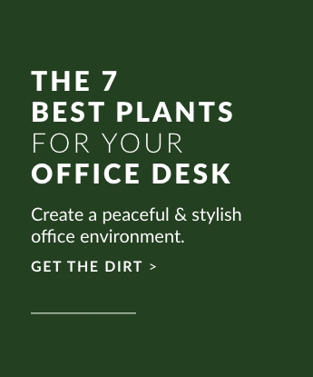 The 7 Best Plants For Your Office