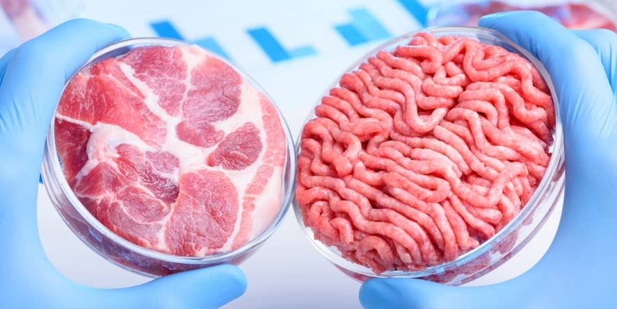 Lab-Grown Meats Will Change the Food Industry Forever