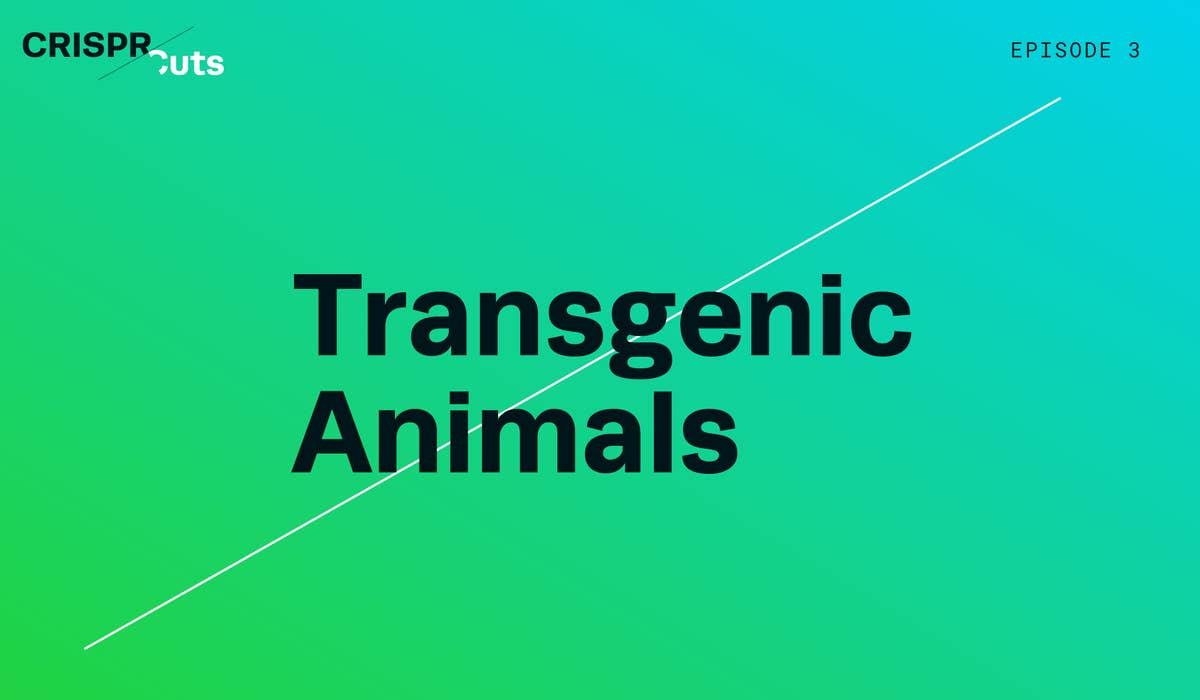 CRISPR Edited Transgenic Animals