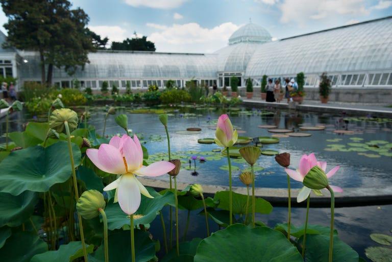 Riverdale_Bronx_Botanical_Gardens.jpg