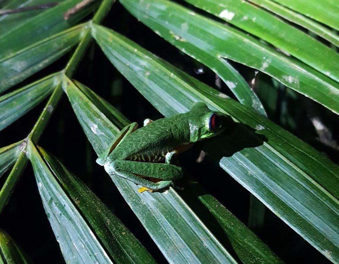 frog_in_tree.jpg